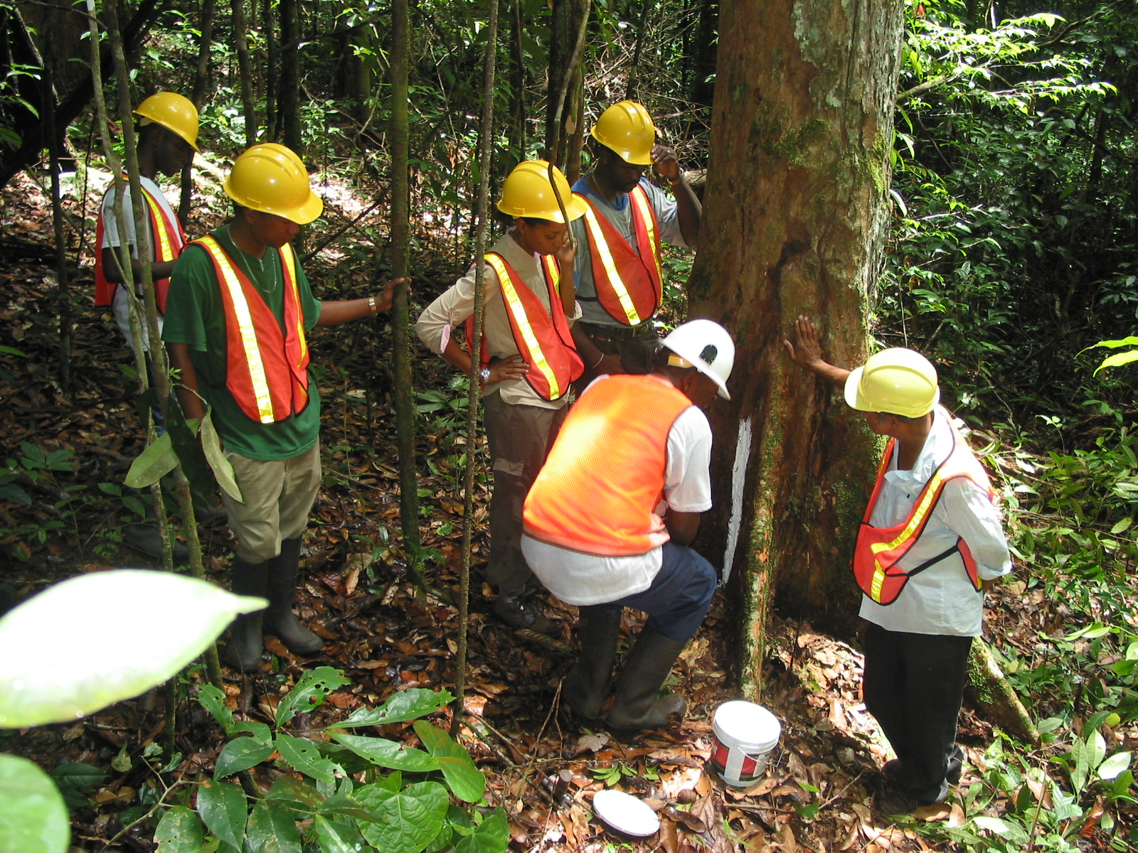 Field Demonstration on Timber Species Identification