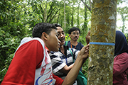Measuring REDD +: Local people receive training in measuring tree diameters to estimate carbon stocks in the Meru Betiri National Park, East Java, Indonesia, as part of ITTO project PD 519/08 Rev.1(F). Photo: FORDA.