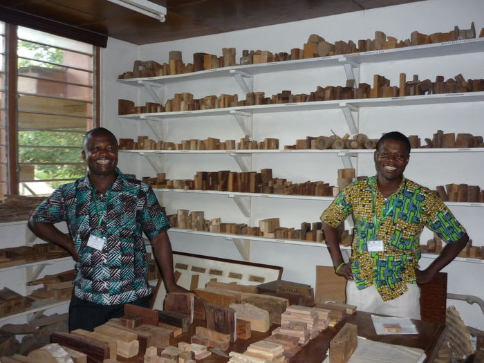 The xylotheque<br><br>This wood library for species identification is being used for reference and training as part of ITTO project PD 620/11 Rev.1 (M) in Ghana.<br>