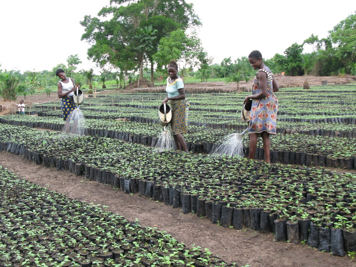 Watering<br><br>Staff tend tree seedlings in a nursery supported by ITTO project PD 678/12 Rev.1 (M) in Benin.<br>