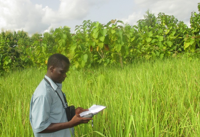 The right coordinates<br><br>A forest official records the coordinates of a teak plantation as part of the development of Togo's Forest Geographical Information System, created under ITTO project PD 581/10 Rev.2 (F).<br>