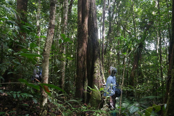 Forest surveys<br><br> ITTO projects help member countries assess the state of their forest resources, such as through project PD 635/12 Rev.2 (F) in Malaysia.<br>