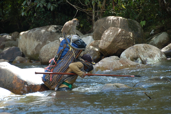 Local management<br><br>A hunter crosses a river in the Pulong Tau National Park in Sarawak, Malaysia, where ITTO project PD 635/12 Rev.2 (F) is assisting local authorities in their approach to managing the park's buffer zone.<br>
