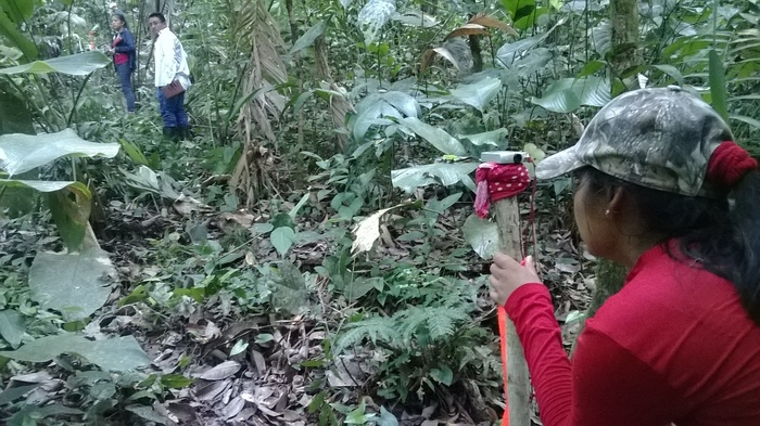 Species inventory<br><br>Foresters establish a monitoring plot during a national inventory of <em>Dalbergia </em>species in Guatemala, with support from the ITTO–CITES Programme.<br>