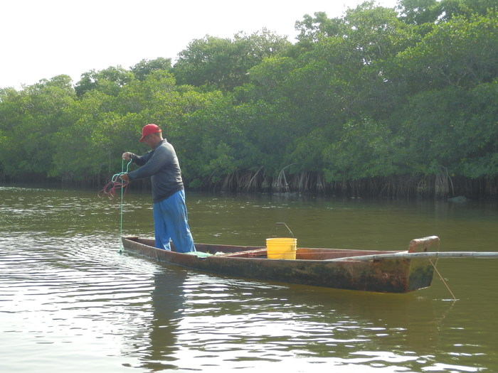 Mangroves and livelihoods<br><br>Mangroves are important ecosystems that support fisheries and other local livelihoods. ITTO project RED-PD 045/11 Rev.2 (M) has evaluated the value of the environmental services provided by flooded forests and mangroves in Veracruz, Mexico.<br>