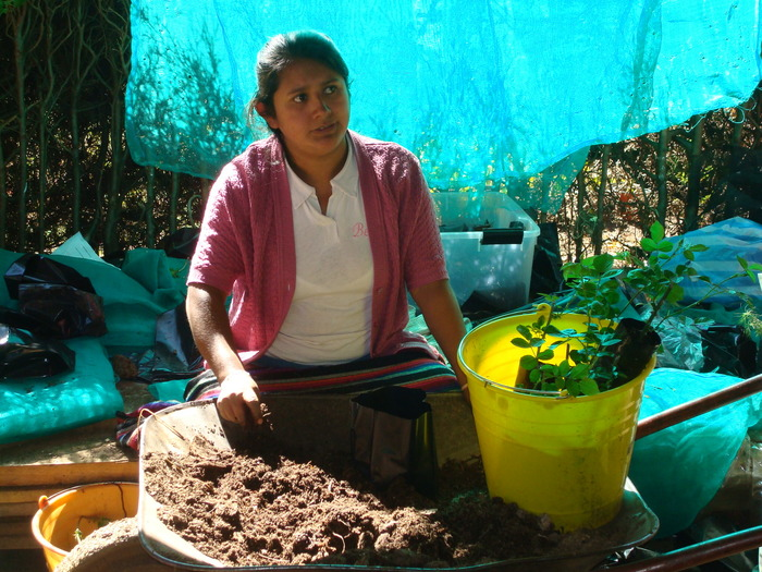 Restoration<br><br>A nursery worker tends seedlings for reforestation as part of ITTO project PD 351/05 Rev.1 (F) in Oaxaca, Mexico.<br>